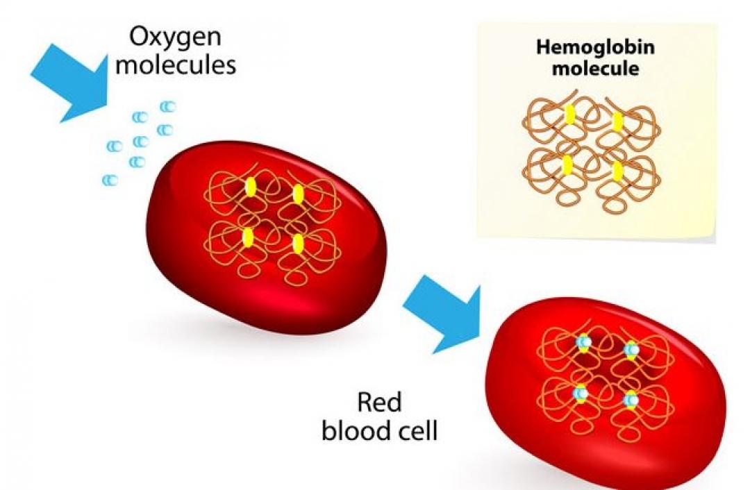 newcara-meningkatkan-hemoglobin.jpg