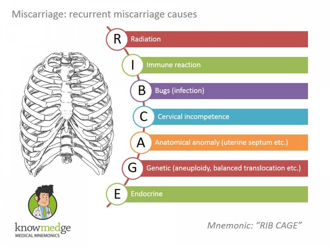 newMedical-Mnemonics-Miscarriage-ribcage.jpg