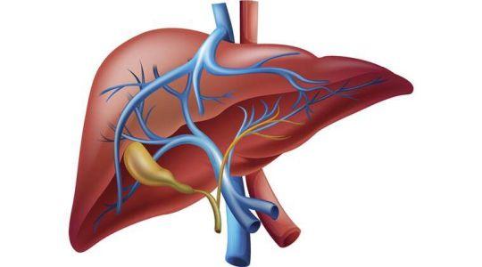 new8+liver-main+iv.jpg