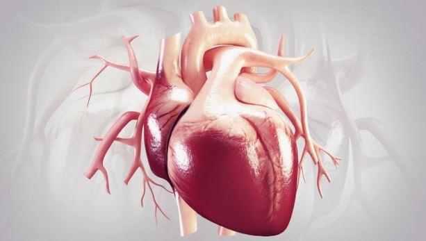 newHEART.JPG
