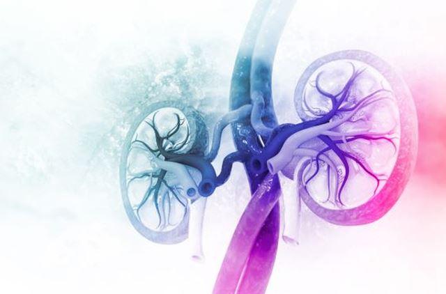 newkidney.JPG