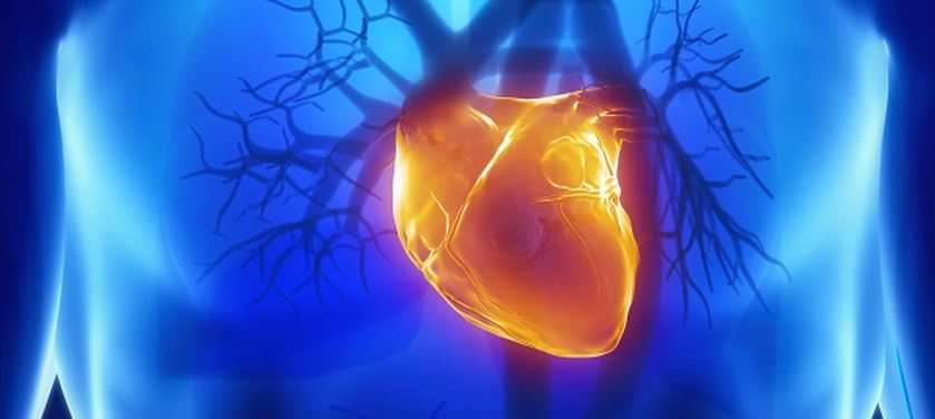 newcardiovascular.JPG